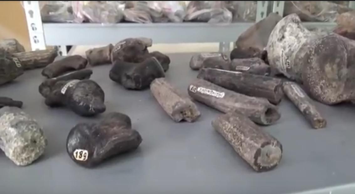Museum Trinil, Fosil-fosil Zaman Purba yang Berserakan
