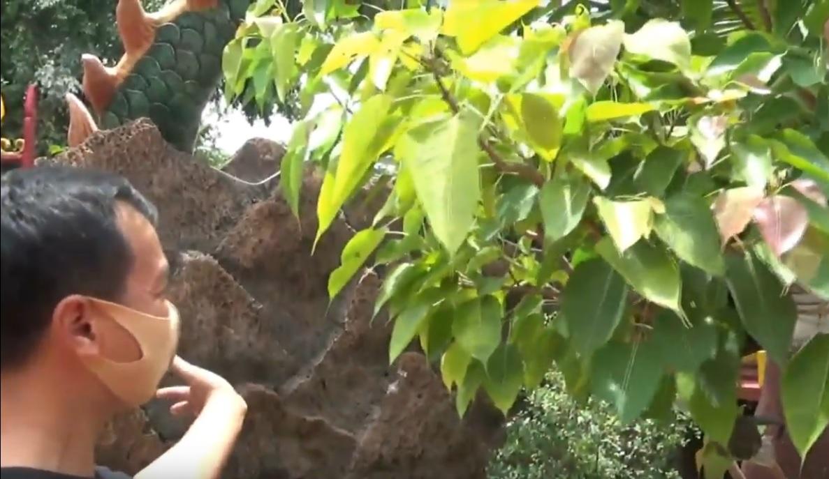 Yudhi Darma Santosa memperlihatkan salah satu tanaman pembawa keberuntungan. (metrotv)
