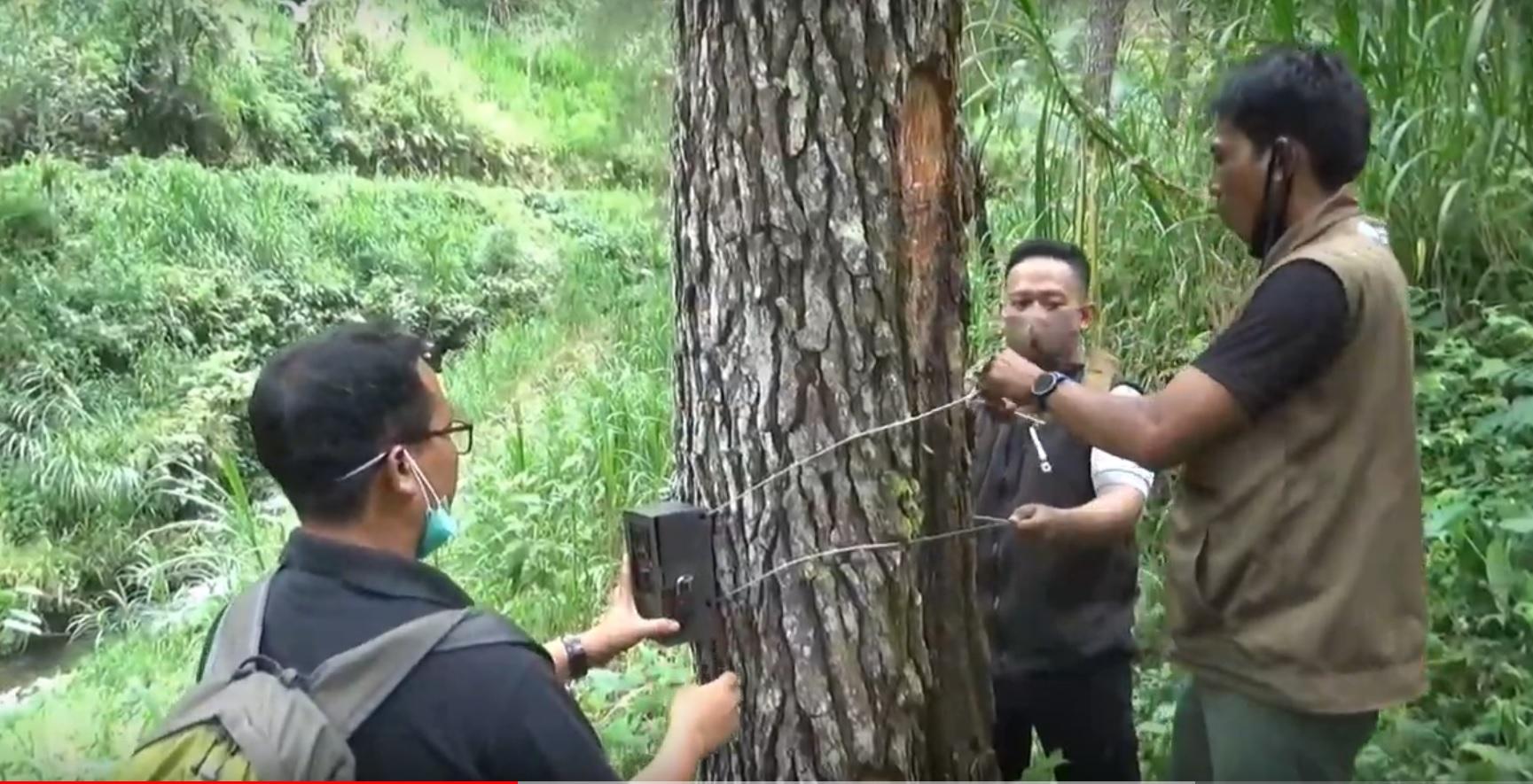 Tim BKSDA Blitar mencabut sebagian kamera pengintai harimau jawa di di kawasan hutan lereng Gunung Wilis, Kecamatan Sendang, Kabupaten Tulungagung (Foto / Metro TV)