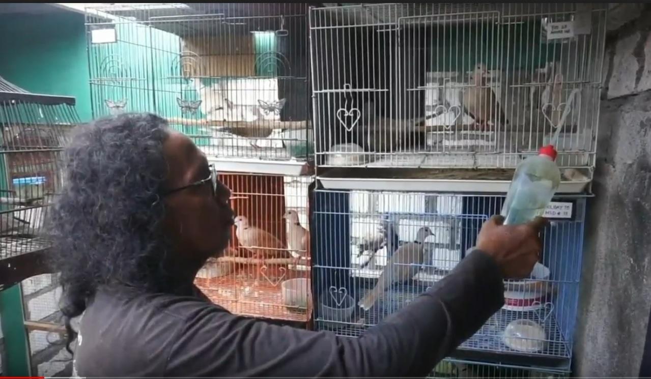 Kisah Mantan Anak Jalanan Suskes Beternak Burung Anggungan