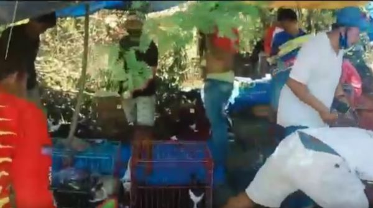 Lomba Balap Kelinci di Sampang Dibubarkan