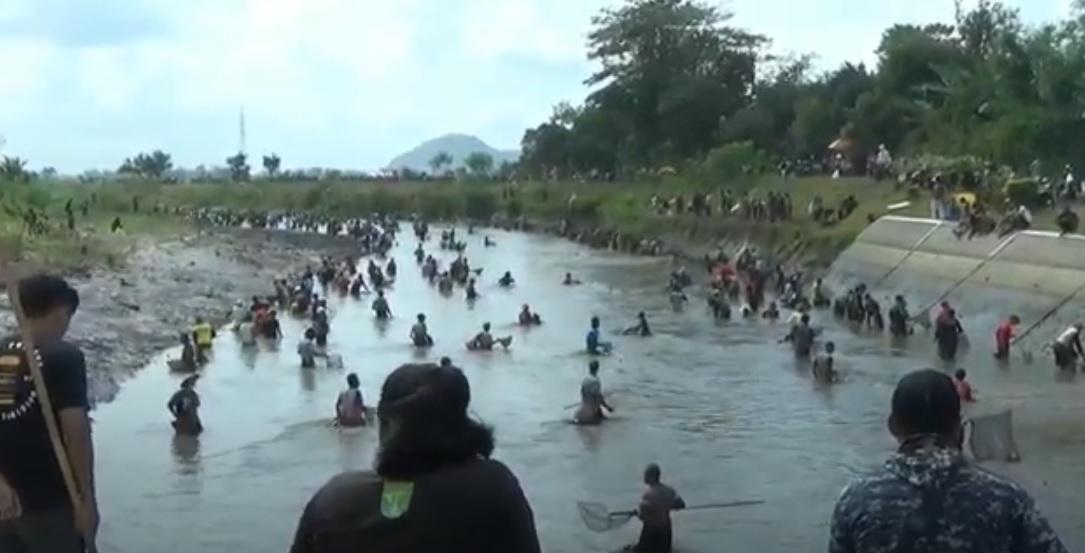 Ratusan Warga Tulungagung Berebut Ikan Mabuk
