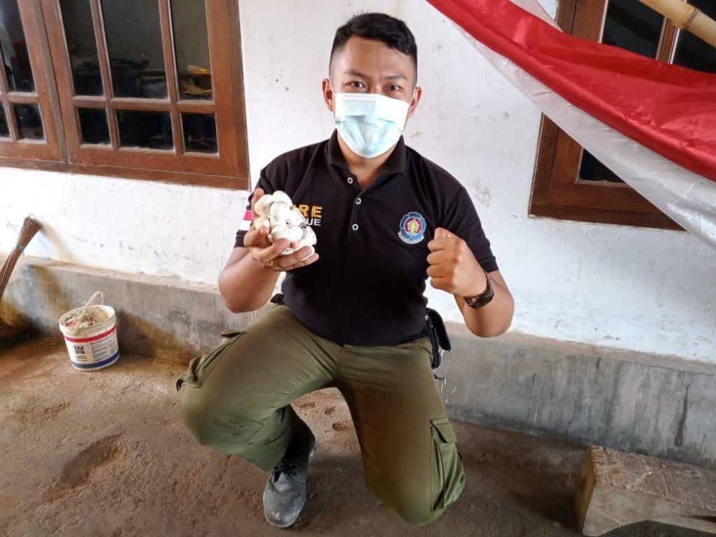 20 telur kobra diamankan petugas Damkar usai mendapat laporan sekolah yang dijadikan sarang ular (Foto / Istimewa)