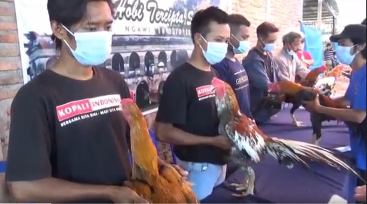 Antusiasme peserta kontes ayam ekor lidi di Kabupaten Ngawi. (metrotv)