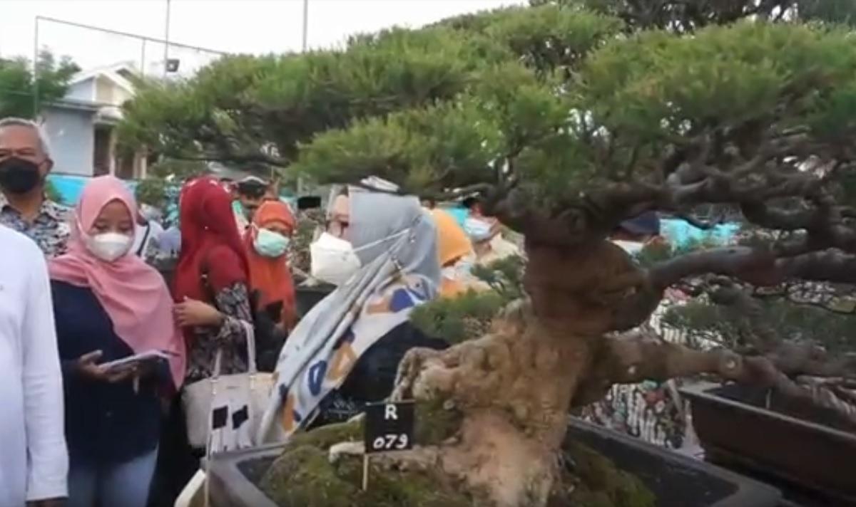 Kampung Bonsai Gresik Gelar Kontes, Raup Untung dari Si Kerdil